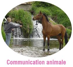 Stage sur la communication avec l'animal, ici le cheval