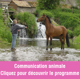 L'animal, De la communication à l'intuition - Description